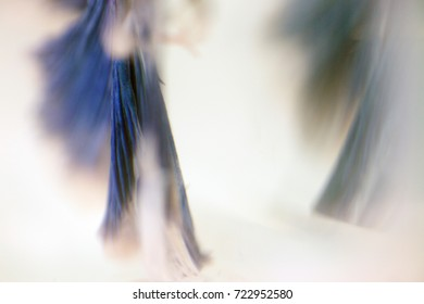 wild fighting fish tails background/high resolution