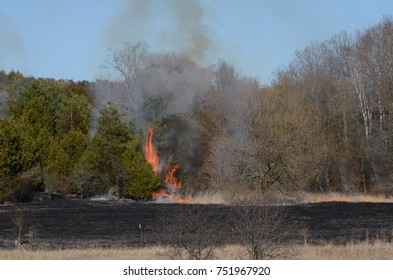 Wild fire and burning meadow grass