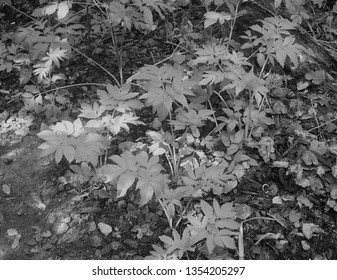 Wild flora growing in Cypriot landscape