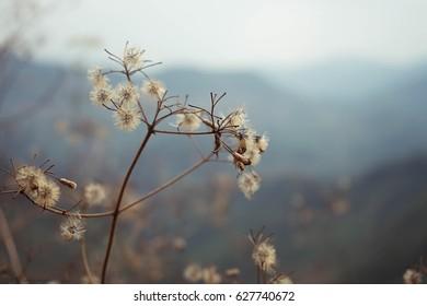 wild flower background