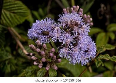 wild flower closeup detail in Ecuador