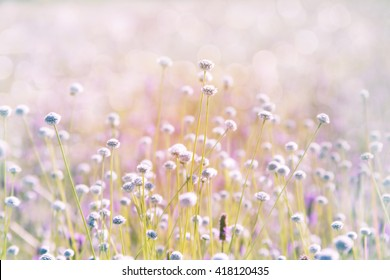 Wild flower field under beautiful lighting
