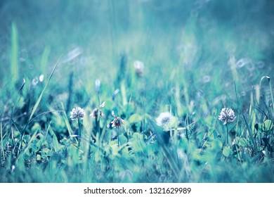 Wild flower. Little flowers on a green meadow spring.