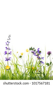 wild flower meadow in front of white background, studio shot