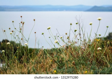 Wild flower meadow and lake Balaton