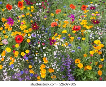 wild flower mix with poppies and lots of bees
