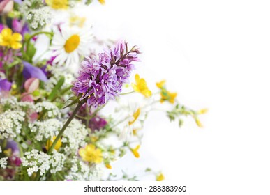 Wild flower on a background of various flowering plants in summer.