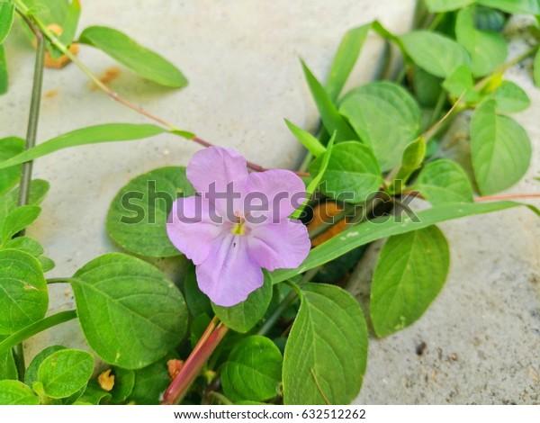 Wild flower on the green garden