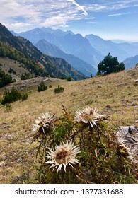 Wild flower in Prokletije, also known as the Albanian Alps and the Accursed Mountains. It is a mountain range on the Balkan peninsula, extending from northern Albania to Kosovo and eastern Montenegro.