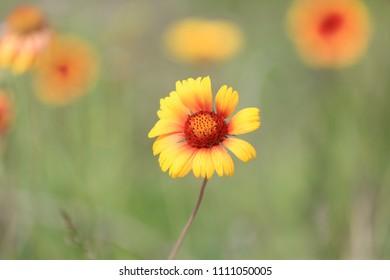 wild flower in summer time - soft photo