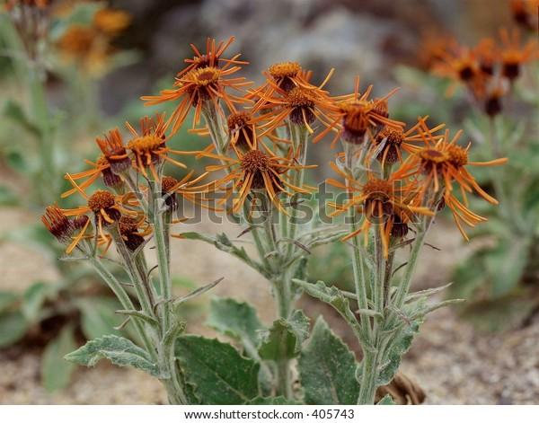 Wild Flowers Wild Flowers
