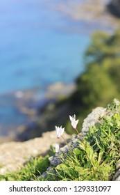 Wild flowers at Akamas peninsula, Cyprus