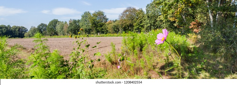 Wild flowers along an agricultural field to increase biodiversity as part of biological farming