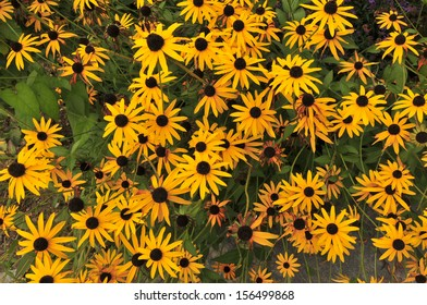Wild flowers, alpine fall flowers,/daisy/The sun shine flower found at high mountain elevation, bringing hope and peacefulness for all.  One of natures natural beauty.