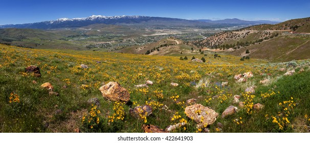 Wild flowers blooming above Reno, Nevada on Geiger Grade.