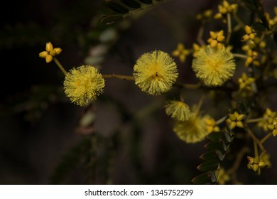 Wild Flowers in The Blue Mountains
