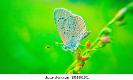 Wild flowers and butterfly in a meadow in nature. the rays of sunlight in summer in the spring close-up of a macro. A pictures colorful artistic image with butterfly.
