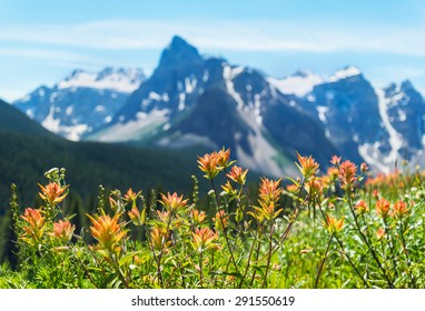Wild flowers up close with a beautiful mountain range in the background