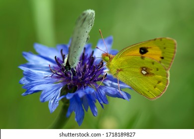Wild flowers of clover and butterfly in a meadow in nature in the rays of sunlight in summer in the spring close-up of a macro. Yellow and blue flowers on a white blank