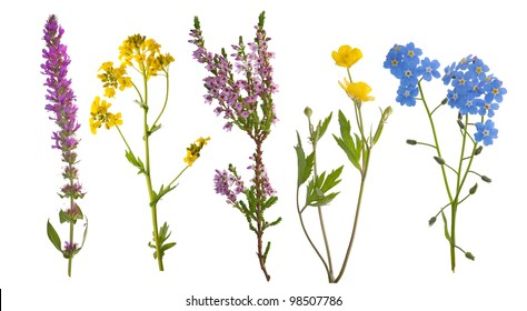wild flowers collection isolated on white background