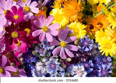 Wild flowers composition.