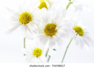 Wild flowers in different shades in high key photo technique with white background