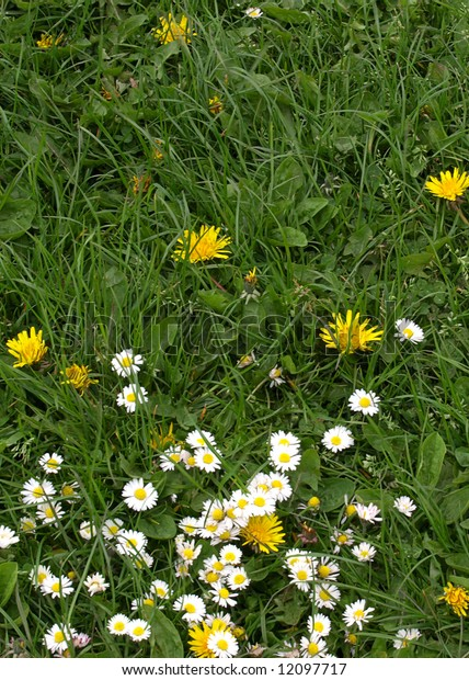 Wild flowers and fresh spring grass