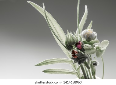 wild flowers and herbs, botanical composition, small bouquet. Gray background.