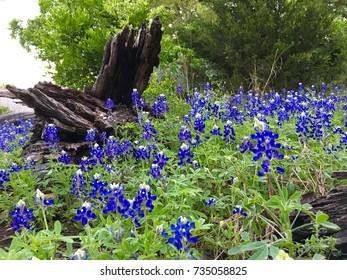 Wild flowers log