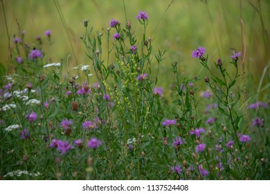 wild flowers - the middle of summer
