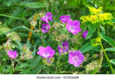 wild flowers in mountain fields