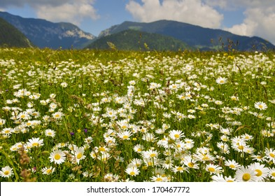 Wild flowers and mountain landscape