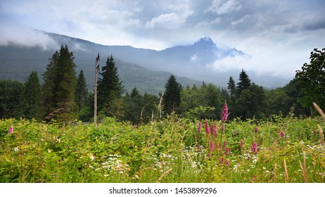 Wild flowers and mountain peak in North Cascades national park