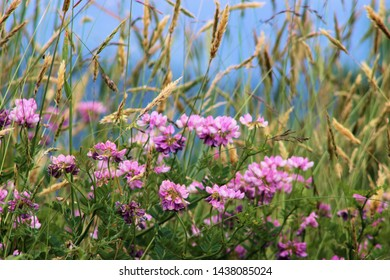 Wild flowers with mountains in the background