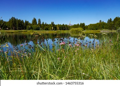 Wild flowers, Mt Washington and a pine forest reflected in a small lake on Black Butte Ranch, central Oregon