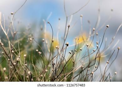 wild flowers on blurred background