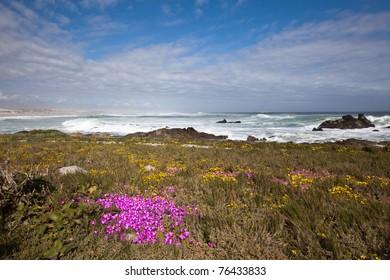 Wild flowers on the coast