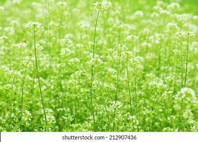 Wild flowers on green meadow. Floral background. Macro image