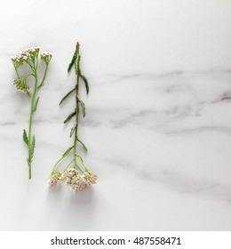 wild flowers on marble. square. flat lay