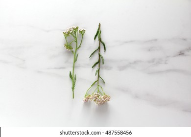 wild flowers on marble.flat lay