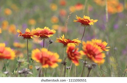 wild flowers on meadow - soft photo
