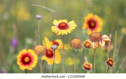 wild flowers on summer meadow