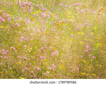 wild flowers on a summer meadow in the grass