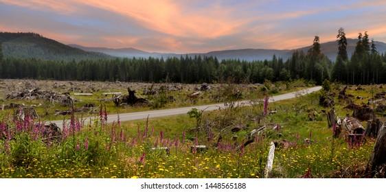 Wild flowers in rural Washington state
