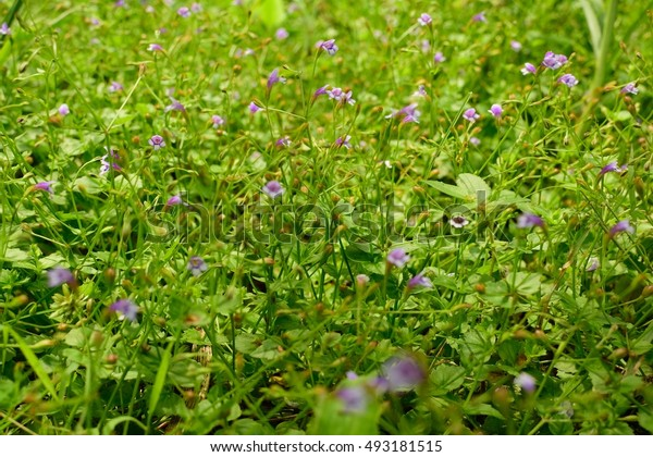 Wild flowers from a small plant