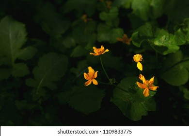 Wild flowers in the sunlight. Dark forest with a beam of light on the flowers