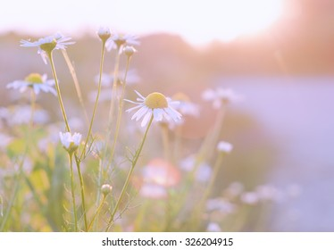 Wild flowers in sunset