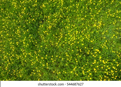 Wild flowers, texture of grass in green field at spring