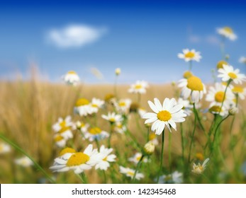 wild flowers and wheat field