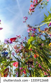 Wild flowers from worm eyes view